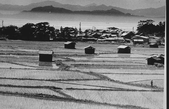 懐かしの淡路島写真館【風景】(5)田園風景から